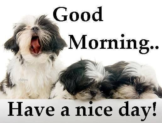 Good Morning Have A Nice Day Cute Quote With Dogs Pictures Photos