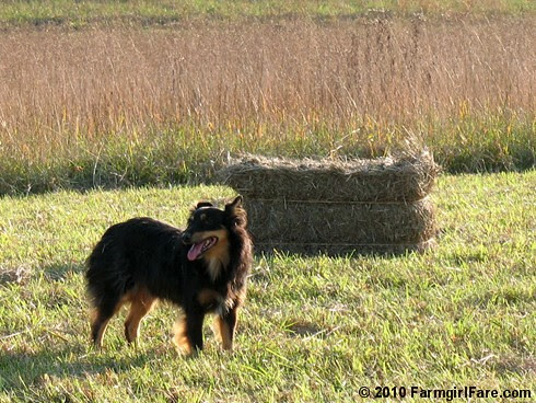 Lucky Buddy Bear Helping Us Bring in the Hay