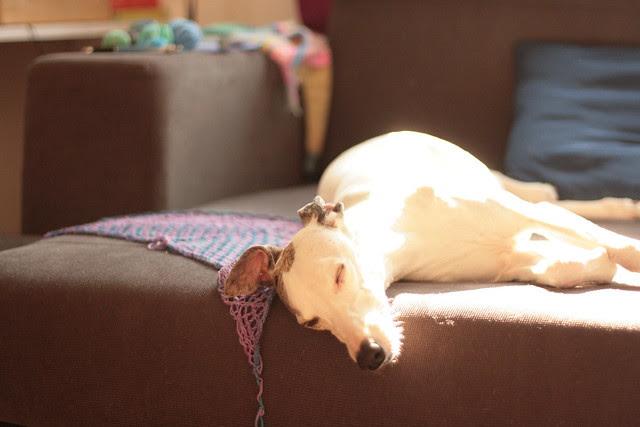 Stella in the sun