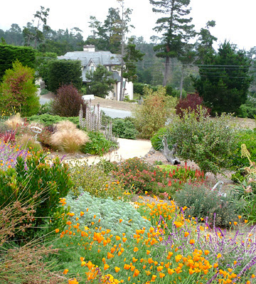 Landscape Garden Design Lawn Alternatives In Santa Cruz California