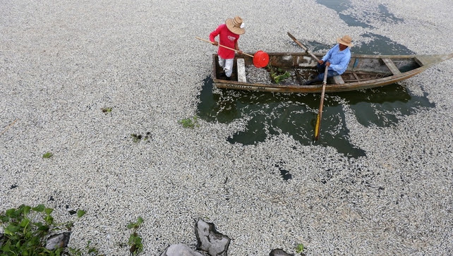 Fishermen, firefighters, and government personnel have been working to remove the dead fish from Lake Cajititlan