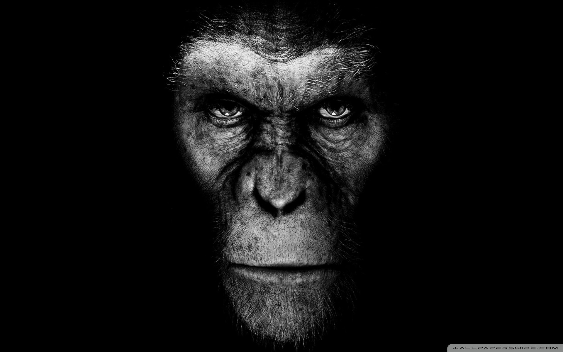 Rise Of The Planet Of The Apes Ultra Hd Desktop Background