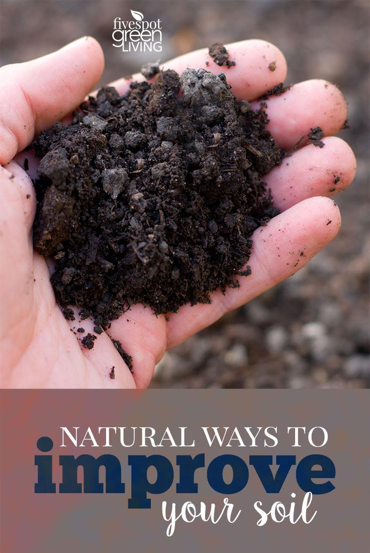 Natural Ways To Improve Your Soil | Fivespot Green Living