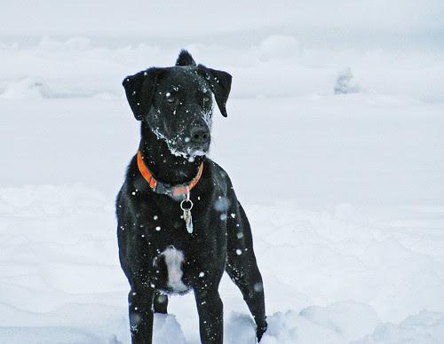 SnowyHenry