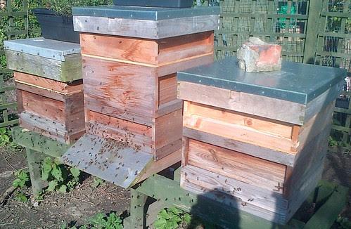 bee hives May 13