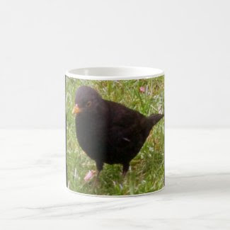 Friendly Blackbird Mug