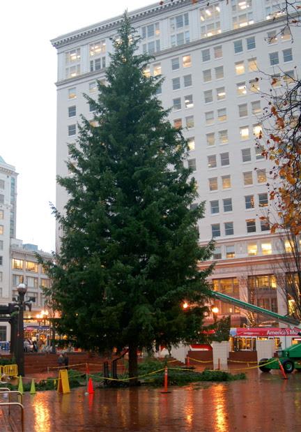 Portland Christmas Tree.Portland Or Daily Photo Portland S Christmas Tree