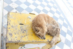 Donation Box At Pushkar Has Gone To The Dogs by firoze shakir photographerno1