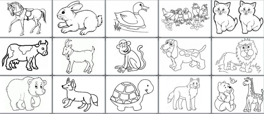 Hayvan Boyama Sayfası