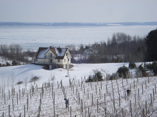 Frozen Bay, Pruning Vines (via farlane)