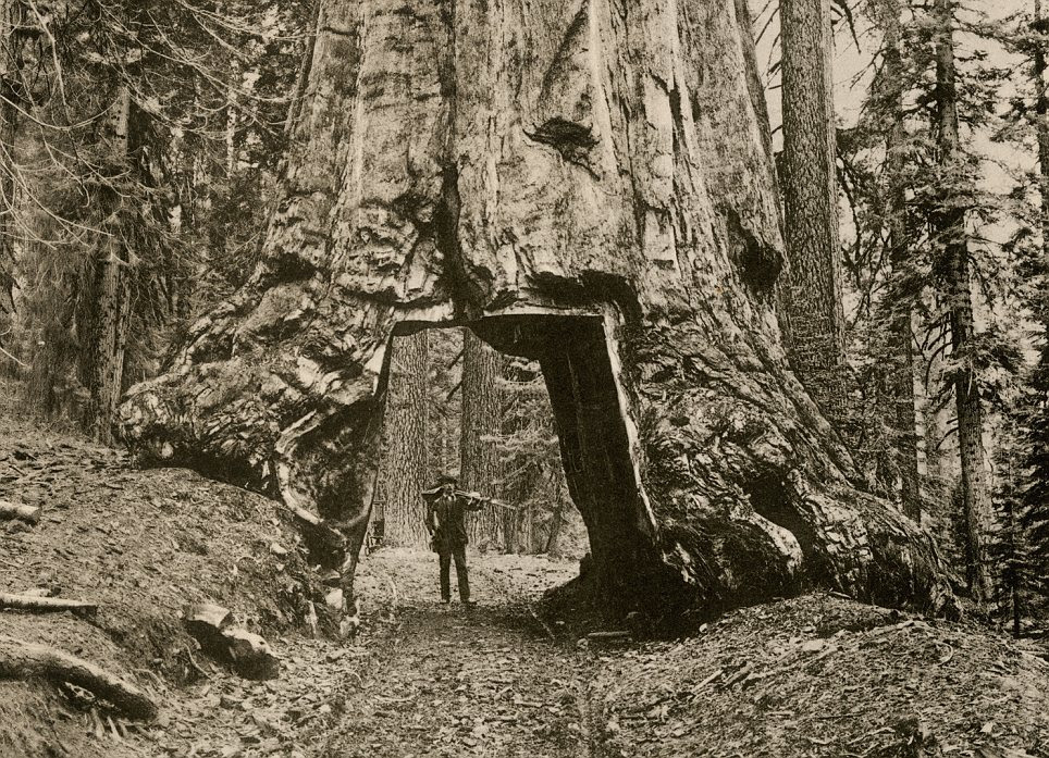 Innovation: A settler in 1890 shows off the path he has cut