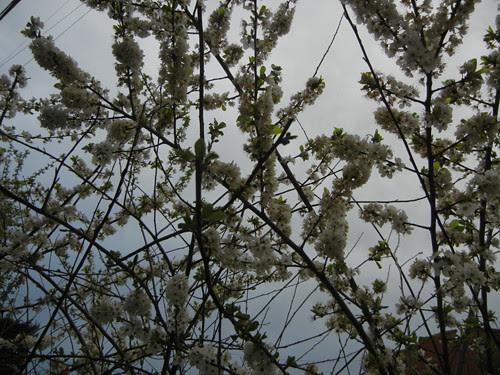 DSCN6044 - Spring Flowers