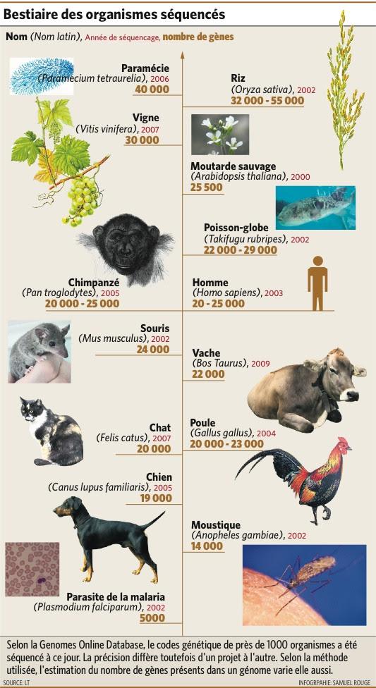 contenu en gènes de différentes espèces