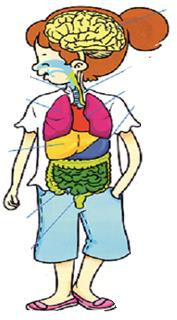 Okul öncesi Fen Oyunu Organlarımı Arıyorum Eğitim Için
