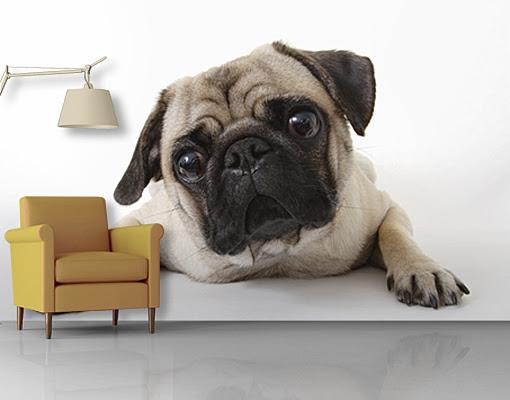 Photo Wall Mural Pug Wallpaper Wall art Wall decor Dog Puppy Cute Animal Pet   eBay