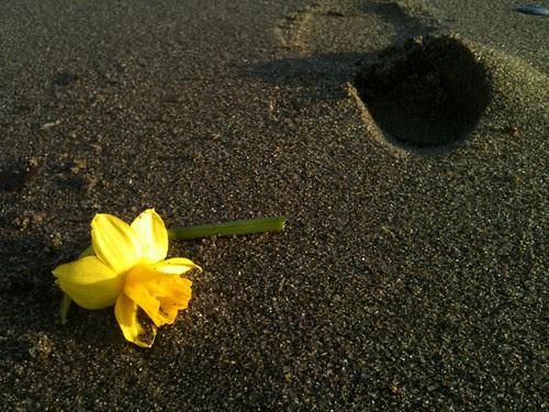 Sandy Spring by Ayala Moriel