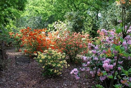 Bokrijk's Arboretum