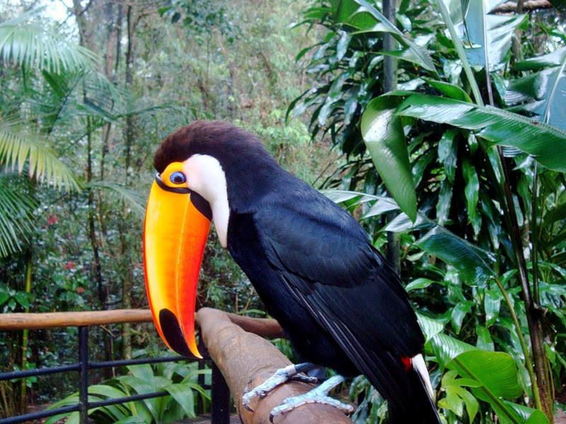 Животные национального парка Водопады Игуасу