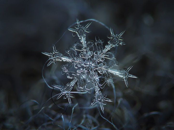 Stunning Macro Details of Uniquely Beautiful Snowflakes - My Modern Met