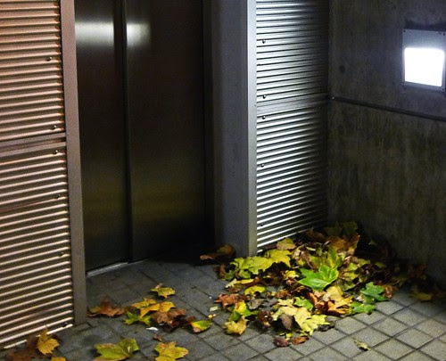 London leaves
