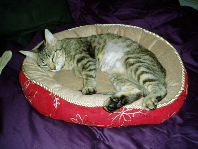 Little Ashley snoozing in the kitty bed
