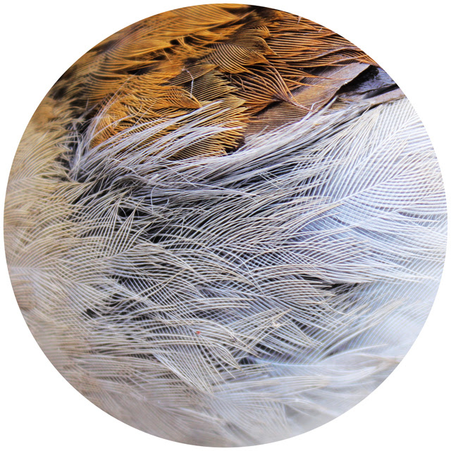 Breast feathers
