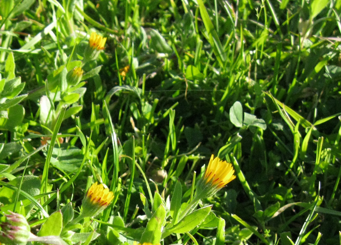 Primeiras flores // Early yellow flowers