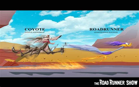 road runner high resolution hd wallpapers  hd wallpapers