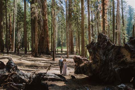 Julia   Jeff's Elopement   Sequoia National Park, CA