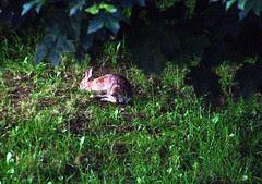 Bunny_71309b