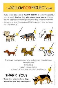 Defensora de animales quiere implementar  uso de lazos amarillos en los perros