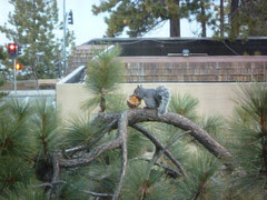 squirrel outside hotel room