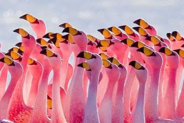 Nakuru: Η λίμνη με τα εκατομμύρια Flamingos (3)