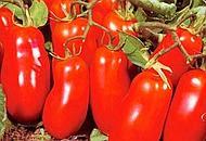 Veri pomodori San Marzano