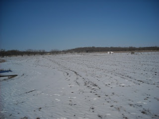 Field After Arctic Storm