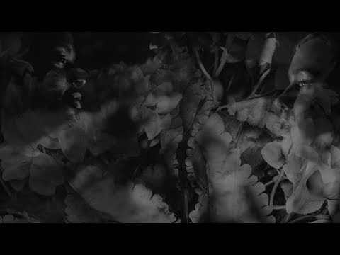 "Wear Your Wounds (Converge Side Project) - New Song ""Shrinking Violet"""