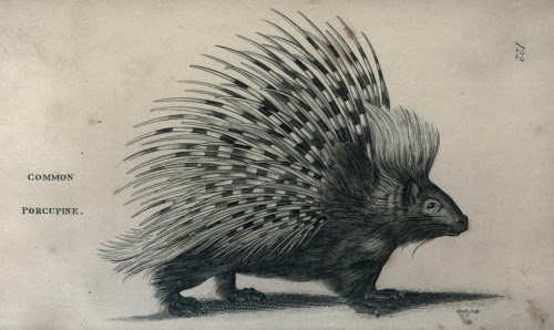 mudwerks:  balnibarbi:  n17_w1150 by BioDivLibrary http://flic.kr/p/eCWKv5  prickly feelings…