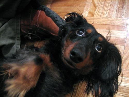 My nephew-dog