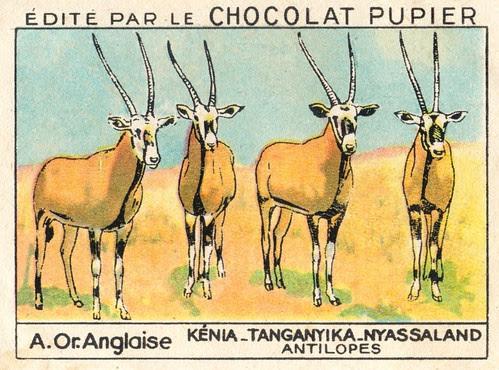 pupier afrique017