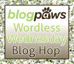 BlogPaws Wordless Wednesday Blog Hop