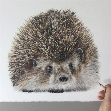 colored pencils realistic animal drawings animal