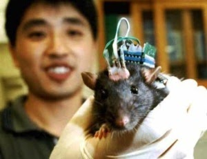 A brain implant could help improve your memory | DVICE