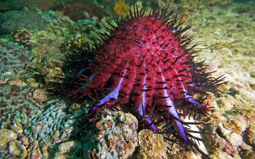 Parakseno.gr : coral 8 Ο μαγικός κόσμος του μεγάλου κοραλλιογενούς υφάλου
