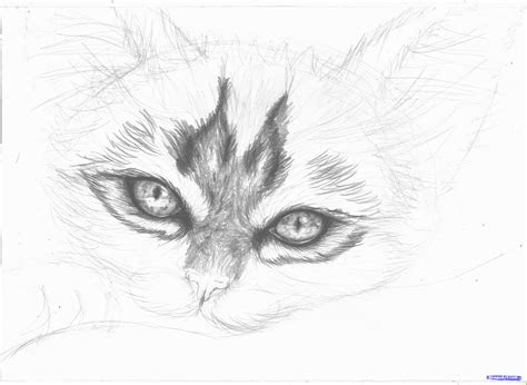 gallery realistic cute animals  draw drawings art