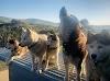 O todos o ninguno, se niega a evacuar sin sus 60 perros tras los incendios en Australia
