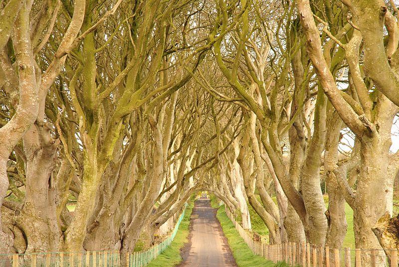 File:Dark Hedges, County Antrim, Northern Ireland (6961336542) (2).jpg