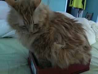 Jasper testing the box