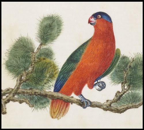 Bird Album h (detail)