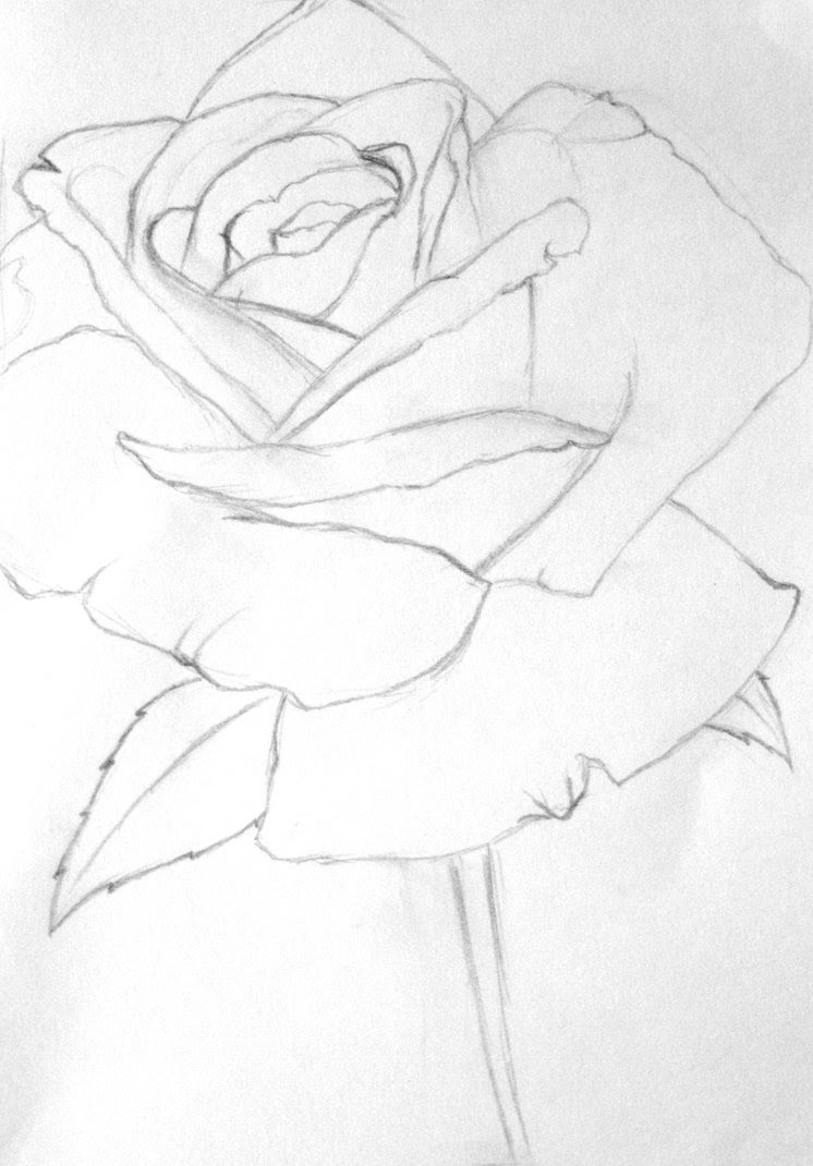 Free Rose Line Drawing Download Free Clip Art Free Clip Art On