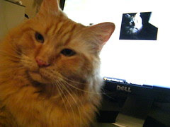 Jasper in front of the monitor X2